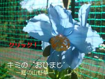 キミBlog.jpg